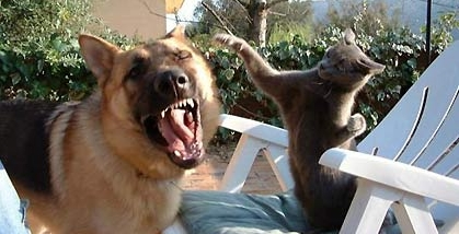 dog_cat_fight.jpg